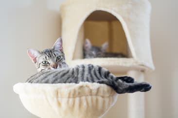 Mini Furniture for Cats is What the World Wants
